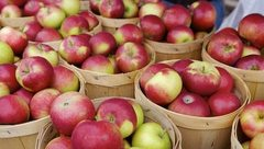 medium_red-apples_2326